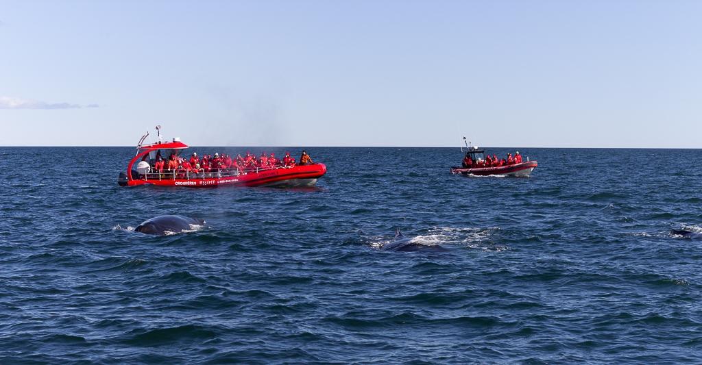 Voir des baleines à Tadoussac