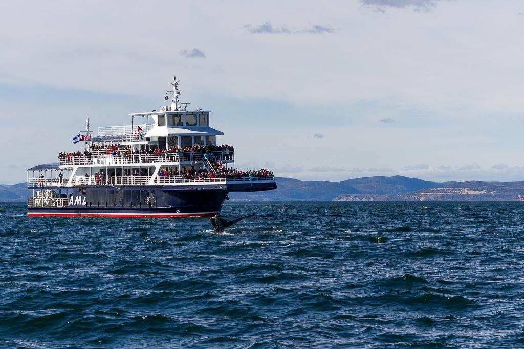 Bateau observation baleines Tadoussac