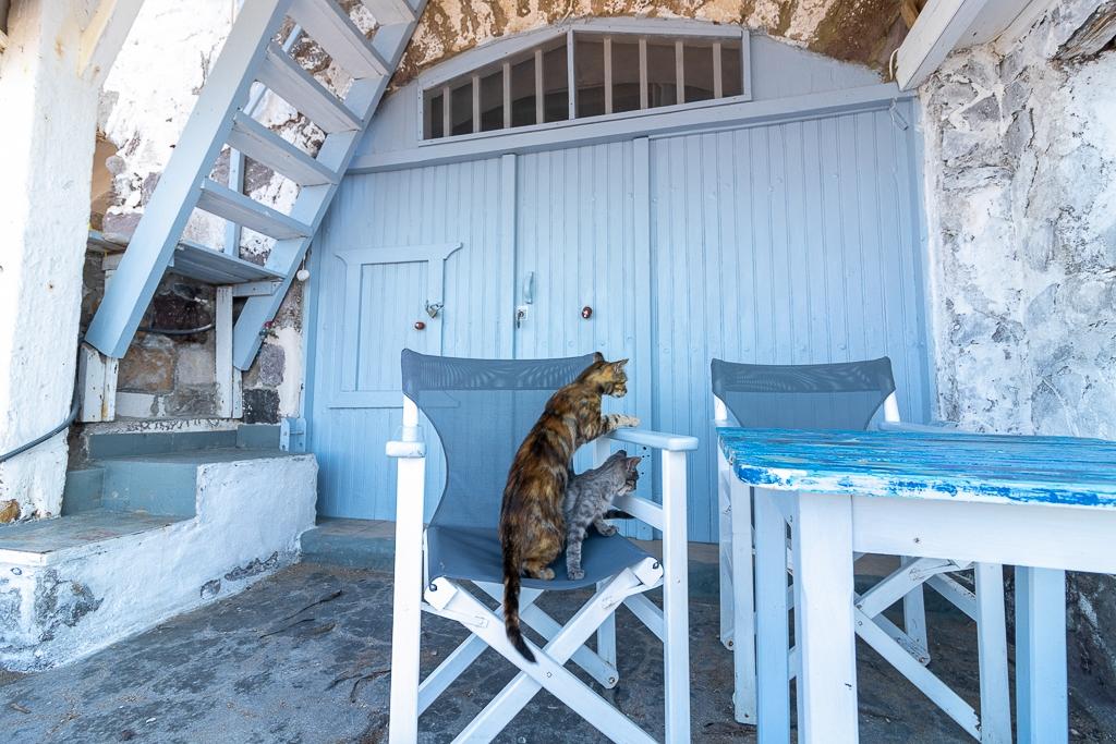 chats à Klima, île de Milos